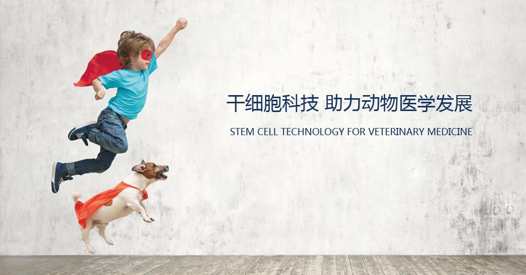 干细胞科技助力动物医学发展