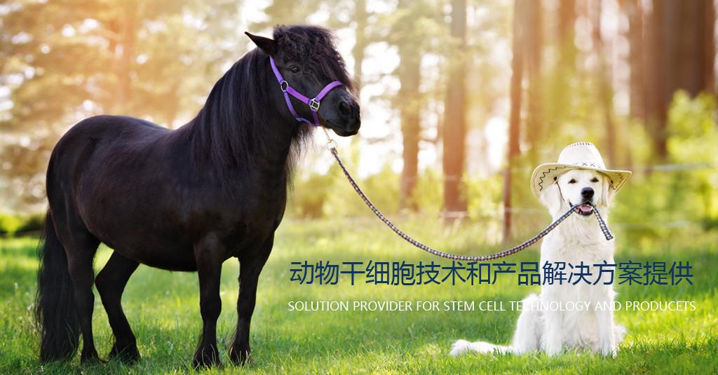 动物干细胞产品和技术解决方案